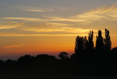 Early in the morning (thobern1) Tags: horses moon sunrise germany mond karlsruhe pferde sonnenaufgang badenwrttemberg schwann monduntergang enzkreis straubenhardt pfaffenrot