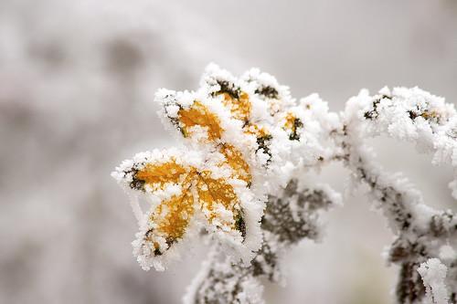 Морозный ноябрь