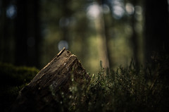 Into the wild (creyala) Tags: wood light wild green nature forest dark moss peace bokeh outdoor peaceful harmony balance lightroom