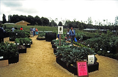 AUG8614 24 - Allotments Society (2)