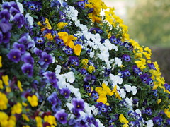 mozirski-gaj_14 (carlo) Tags: flowers olympus slovenia slovenija fiore botanicalgarden omd em1 ortobotanico giardinobotanico mozirje mozirskigaj