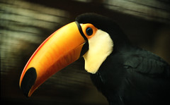 1986 Blem_1753 (ixus960) Tags: southamerica brasil america brsil amazonia amazonie amazone amrique amriquedusud