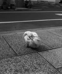 GATEGUARD (Dinasty_Oomae) Tags: street blackandwhite bw monochrome tokyo blackwhite duck shrine outdoor  zeissikon  taitoku          supersix higashiueno