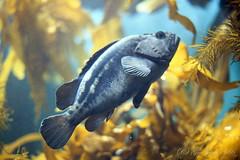 20160227-07 (GenJapan1986) Tags: film japan aquarium  miyagi  2016     nikonnewfm2 fujifilmfujicolorsuperiaxtra400