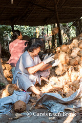 Land of the Flying Coconuts (10b travelling) Tags: river asian asia asien southeastasia vietnamese delta vietnam asie coconuts mekong indochine indochina 2015 bentre tenbrink carstentenbrink iptcbasic 10btravelling