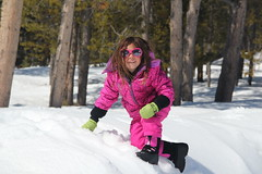 Jovie up a snowbank (Aggiewelshes) Tags: travel winter snow april wyoming jacksonhole colterbay jovie grandtetonnationalpark 2016 gtnp