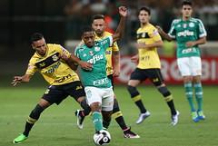 Palmeiras x So Bernardo (18/04/2016) (sepalmeiras) Tags: palmeiras sep sobernardo campeonatopaulista sriea1 allianzparque matheussales palmeirasxsobernardo18042016