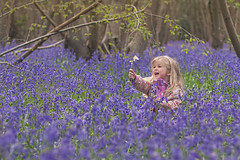 In the forest, a sea of blue (@sage_solar) Tags: flowers blue england white green nature girl smiling bluebells female youth happy spring woods colorful child daughter young blond colourful discovery