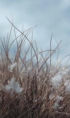 Little World (chaussonlallier) Tags: snowflake blue snow macro green grass pentax pastel littleworld macrophotography macrophotographie