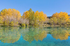 Golden Reflections (Beth Wode Photography) Tags: blue autumn trees newzealand yellow reflections beth nz twizel autumngold wode bethwode