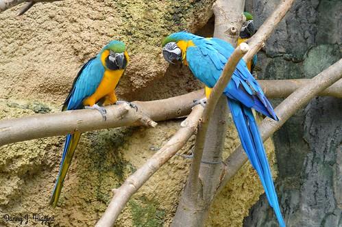 Henry Vilas Zoo, Madison, Wisconsin.       DSC_6328
