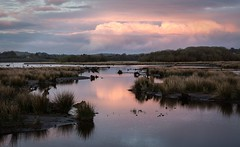 Gearagh national park (elaine butler) Tags: ireland sunset nature cork explore butler elaine info macroom gearagh