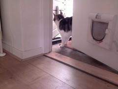 20160501-111501-i-1 (Catflap central) Tags: camera pet cats cat pi raspberry meow catdoor catflap kattenluik katzenklappe catflapj2nnl