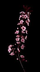 Flowers (martha hoo) Tags: flowers flower macro nature lowlight natur blume makro blten