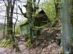 Backes in Bremge (rosiisphording) Tags: deutschland outdoor alt nrw landschaft baum frhling backhaus attendorn sauerland backes biggetalsperre bremge