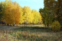 DSC_6062 (Rustam Bikbov) Tags: autumn september 2012    sverdlovskoblast