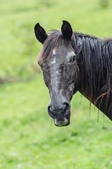 Pirocão (mcvmjr1971) Tags: horse nikon 85mm sítio nikkor cavalo f18d tapiraí d7000 mmoraes