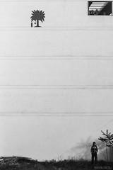 Pura fachada (Nando Verdú) Tags: byn blanco arbol pared persona gris monocromo negro minimal alicante silueta balcon fachada pequeña pequeño objeto elda petrer minimalista descampado maleza sencillo sencillez baticao