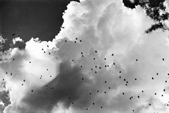 flocks (itawtitaw) Tags: above light sky bw cloud sun white black film nature weather birds silhouette contrast analog skyscape outside 50mm diy blackwhite shadows bright olympus scan lookup lensflare epson sw 135 ilfordxp2super schwarzweiss c41 om2n v700 fröttmaningerheide tetenal colortec fzuikoautos50mm18