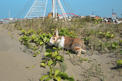 (ina070) Tags: sea rabbit green beach animals canon 50mm leaf      6d      zhuwei        canon6d