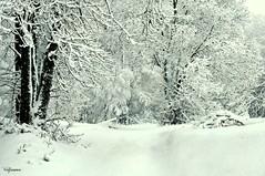 15012016-_DSC0011 (vidjanma) Tags: hiver neige paysage chemin granhes