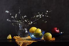 First Blossom (panga_ua) Tags: flowers water fruits yellow spring blossom pomegranate lemons buds blossoming twigs glassjug greenspots firstblossom blueglassbowl