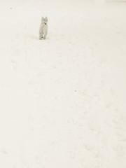 Luigi (Kookoo sabzi) Tags: snow luigi snowscape january2016