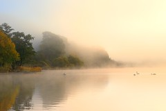Lakeland Mists (Tony Armstrong-Sly) Tags: autumn england mist nature water landscape geese lakes lakedistrict ducks cumbria waterscape ullswater