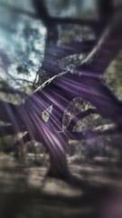 (lpederson754) Tags: shadows oaktree sunflare tiltshift phonephotography filtereffects