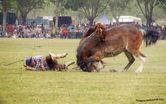 Jineteada 3_3 (pniselba) Tags: horse criollo caballo buenosaires gaucho tradicion provinciadebuenosaires sanantoniodeareco areco jineteada diadelatradicion