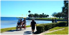 Northshore Park - St Petersburg, Florida (lagergrenjan) Tags: park beach st palms florida north petersburg bicycles shore