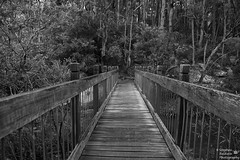 0D6A5682 - Glenrock State Conservation Area (Stephen Baldwin Photography) Tags: trees blackandwhite water monochrome newcastle walking landscape bush sand state earth conservation australia nsw area glenrock