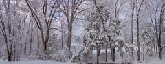 DSC01604-Pano (johnjmurphyiii) Tags: winter usa snow connecticut shelly cromwell originaljpeg johnjmurphyiii 06416 sonycybershotdsch90