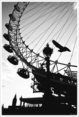 _1030347 London in silhouette (whimsical yet dedicated) Tags: uk blackandwhite bw building bird london monochrome animal silhouette pigeon backlit eyeoflondon photoborder