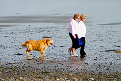 A Warm March Day (radiorocky) Tags: ocean sea people dog pet beach water march spring sand warm newengland newhampshire sunny pebbles shore seashore jennes jennesstatebeach