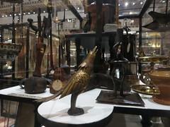 bird (cleanskies) Tags: bird pittriversmuseum