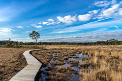 Thursley Common - new boardwalk (markhortonphotography) Tags: new blue sky tree nature clouds reserve bluesky surrey national heath boardwalk common scrub heathland thursley thursleycommon nnr nationalnaturereserve markhortonphotography