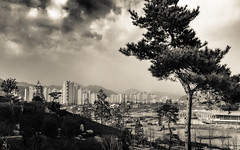 DSCF7066.jpg (koribrus) Tags: park city travel trees urban blackandwhite bw cloud white black tree monochrome pine clouds garden noir fuji expo south monochromatic korea international korean fujifilm kr southkorea bnw kori 2012 brus suncheon jeollanamdo vsco vscocam x100s koribrus