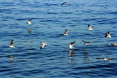 Cinta Costera (Luis Eduardo ) Tags: blue sea reflection water seabirds luismosquera