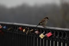 (J.Carlos Prez) Tags: bird de desenfoque campo animales pjaro profundidad candados