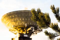 Im Hintergrund.jpg (Housetier84) Tags: pine dish aerial latvia soviet spy kiefer sovietunion conifer sundowner lettland udssr satellitenschssel