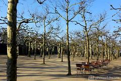waiting... (photos4dreams) Tags: garden darmstadt mathildenhhe hain 2016 platane platanen platanenhain photos4dreams photos4dreamz p4d platanengarten