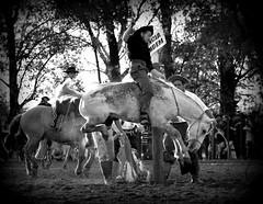 Jos Rockenbach (Eduardo Amorim) Tags: brazil horses horse southamerica brasil criollo caballo cheval caballos cavalos pferde cavalli cavallo cavalo gauchos pferd riograndedosul pampa hest hevonen campanha brsil chevaux gaucho  amricadosul fronteira hst gacho  amriquedusud  gachos  sudamrica suramrica uruguaiana amricadelsur  sdamerika crioulo caballoscriollos criollos jineteada   americadelsud gineteada  crioulos cavalocrioulo americameridionale caballocriollo eduardoamorim cavaloscrioulos