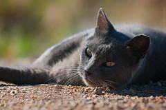 Farewell (Luis-Gaspar) Tags: portrait praia beach portugal face animal cat nikon feline outdoor iso400 retrato rip gato farewell felino oeiras nina f5 streetcat d60 adeus 11250 gatoderua pacodearcos 55300