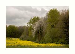 Campagne (hlne chantemerle) Tags: panorama france jaune gris photographie champs vert ciel arbres nuages paysage printemps fort