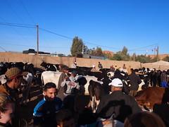 P4162073 (t_y_l) Tags: morocco marokko tinghir suq 2016 tinerhir
