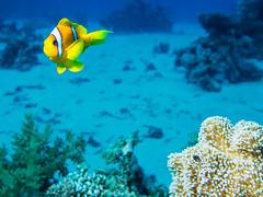 IMG_0696 (eye[4]eye) Tags: egypt diving gypten tauchen bluewaves