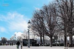 Garden of the Louvre (MrAlnaqbi) Tags: street travel blue autumn trees light sky cloud paris france tree bird nature beautiful canon garden lights landscapes town nice louvre like flicker llandscape canon70d instagramapp mralnaqbi