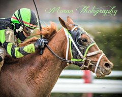 Celtic Chaos (EASY GOER) Tags: horse sports canon racing aqueduct 5d 56 equine thoroughbreds 400mm markiii