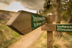 sign posts in Birnam Wood (grahamrobb888) Tags: green signpost sigma20mmf18 birnamwood nikond800